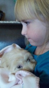 Petitedoodle Puppy Held by Young Girl