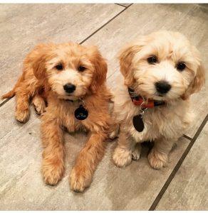 zoe and charlie 2