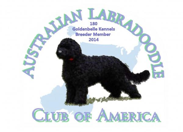 Petite, Mini & Tiny Goldendoodle Puppies for Sale | GoldenBelle Kennels